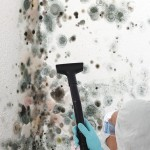 Black-Mold-Remediation-Kirkland