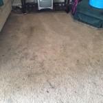 Kirkland-Dirty-Carpet