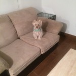 Kirkland-Sofa-Pet-Stain-Cleaning