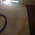 Kirkland-Traffic-Area-carpet-cleaners