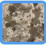 Water-Mold-Removal-Kirkland